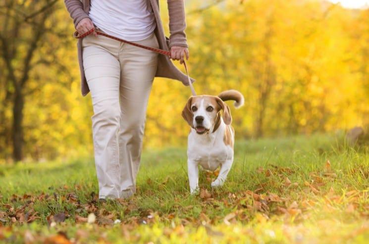 Cool Dog Walking Business Names
