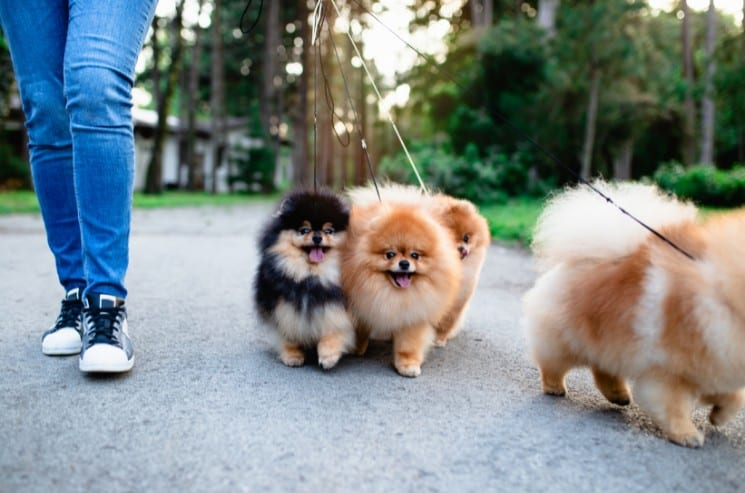 The Best Dog Walking Business Names