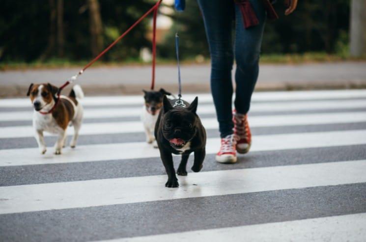 Funny Dog Walking Business Names